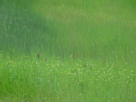 Field Texture Pack I by Angela Hansen