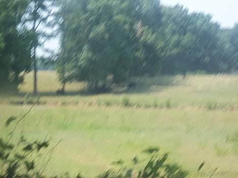 Field with a Creek by Scarlett Stephenson