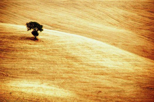 Fields of Gold by Alberto Catellani