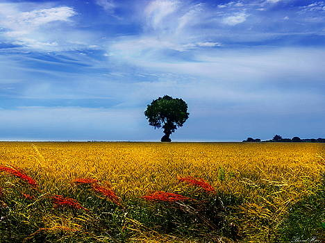 Fields Of Gold by Bernd Hau