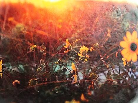 Fields of Gold by Jackie Cort