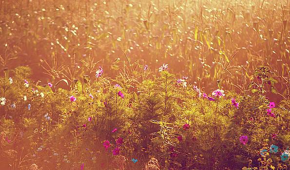 Jenny Rainbow - Fields of Gold