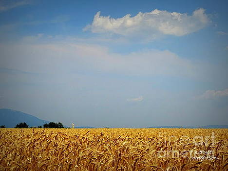 Fields of Gold by Lainie Wrightson