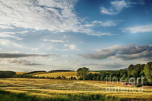 Fields of golden wheat English landscape by Simon Bratt Photography LRPS