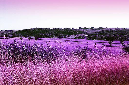 Fields of Purple Majesty by Lon Casler Bixby
