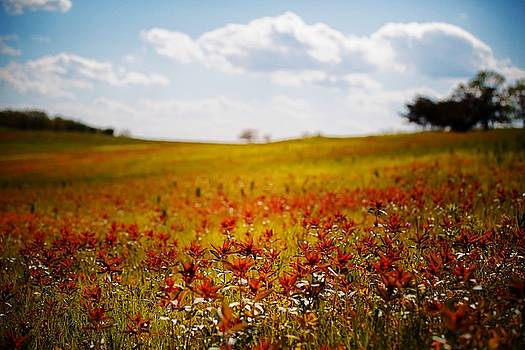 Fields of Red and Gold by Scott Fracasso