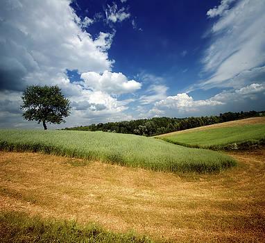 Fields of rye by Swen Stroop