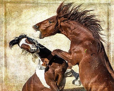 Fierce Fight  by Mary Hone