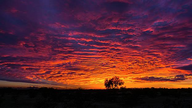 Saija Lehtonen - Fiery Arizona Skies