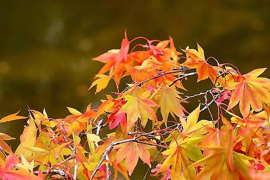 Art Block Collections - Fiery Autumn