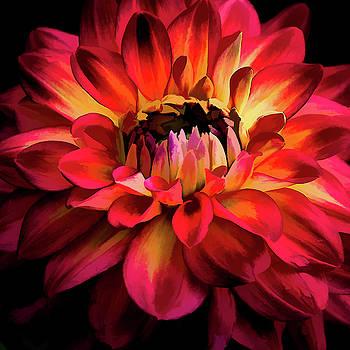 Julie Palencia - Fiery Red Dahlia