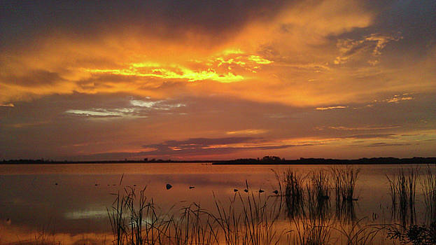 Fiery Sunset by Liza Eckardt