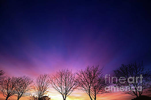 Fiery winter sunset with line of bare trees by Simon Bratt Photography LRPS