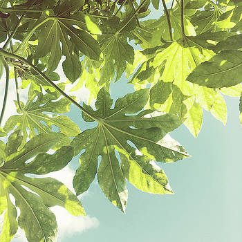 Fig Leaves by Cassia Beck