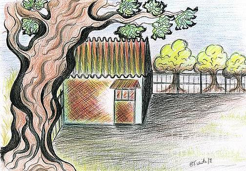 Fig Tree by Teresa White