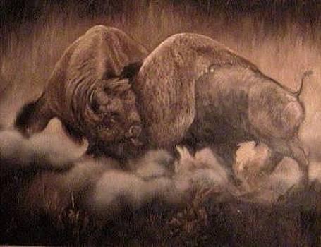 Fighting Buffalo by Gordon Sage