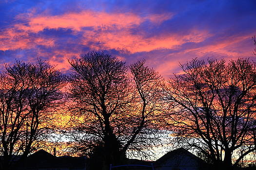 Filigree Sunset by Nareeta Martin