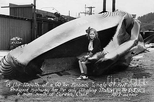 California Views Mr Pat Hathaway Archives - Fin Whale 69 feet long at Fields Landing whaling station circa 1945