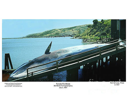 California Views Mr Pat Hathaway Archives - Fin Whale on the ramp of the Del Monte Fishing Co.  1967
