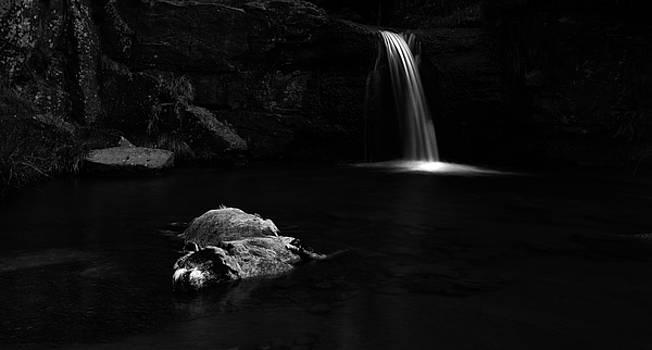 Final Resting Place by Nigel Jones