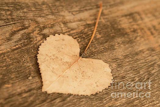 Finding Hearts by Ana V Ramirez
