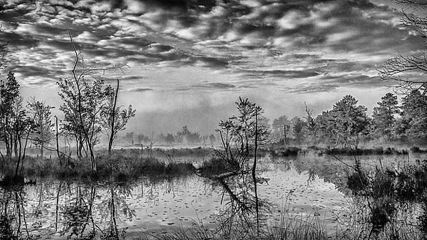 Louis Dallara - Fine Art Jersey pines landscape