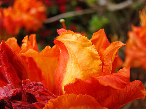 Baslee Troutman - FINE ART PRINTS Rhododendrons Floral Rhodies Baslee Troutman