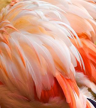 Fine Feathers by Risa Bender