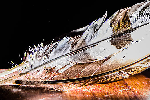 Fine Feathers by Sue Lyon-Myrick