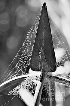 Finial And Webs by Tracey Lee Cassin