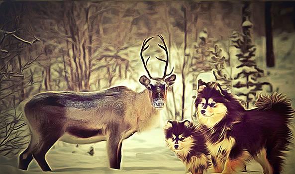 Finnish Lapphunds by Janice MacLellan