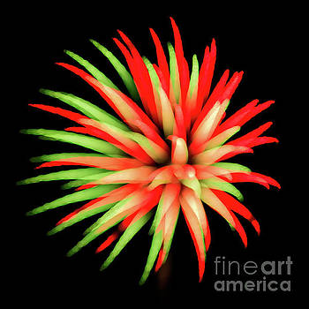 Fire Burst by Doug Sturgess