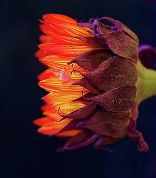 Fire Flower by Risa Bender