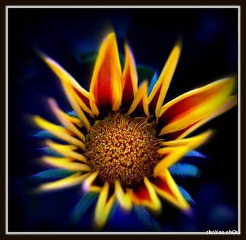 Fire Flower by Shayne Johnson Fleming