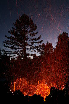 Fire in the Forest by Dave Brooksher