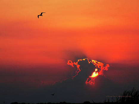 Fire in the Sky by Charles McKelroy