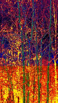 Fire In The Trees by Becky Kurth