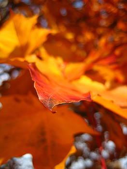 Fire Leaf by Sheryl Burns