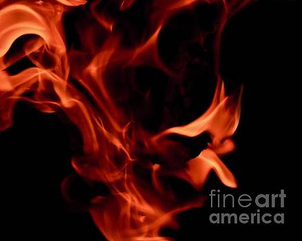 Fire Petals by Sandra Day