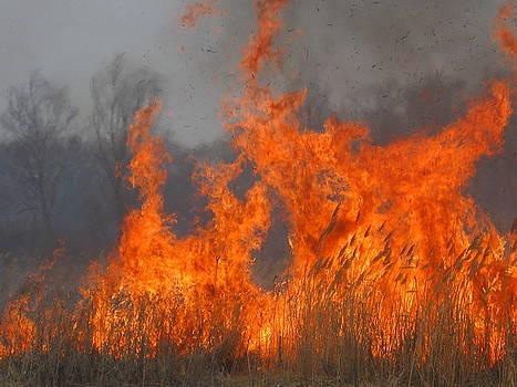 Fire Spirit by Tatyana Primak