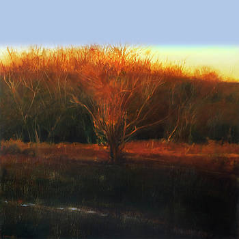 Fire Tree 2 by Cap Pannell