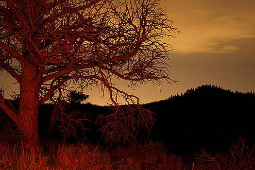 Fire Tree by Jeffery Ball