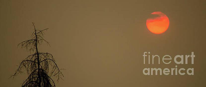 Fireball by Nick Boren