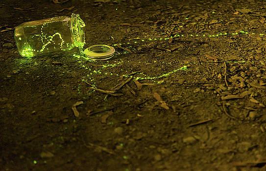Fireflies #1 by Sander Hunter