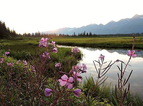 Fireweed at Robe Lake by Denise   Hoff