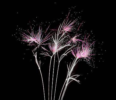 Fireworks Explosive Stardust by Scott Lyons