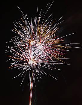 Fireworks Midnight Dandelion by Scott Lyons
