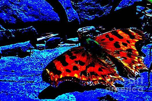 Firey Butterfly by Cynthia Riley