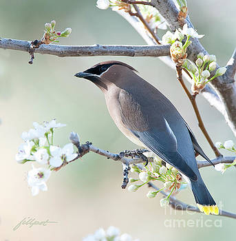 First Day of Spring by Jim Fillpot