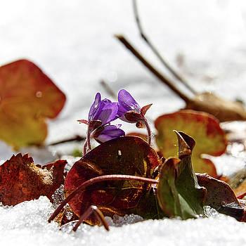 First flowers by Jouko Lehto